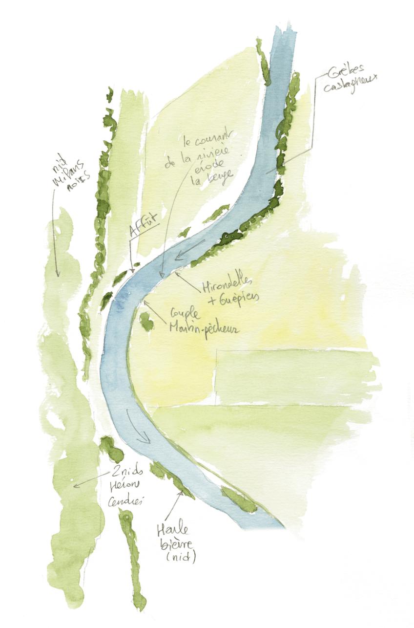 A la recherche du martin-pêcheur sur la Loue dans le Jura
