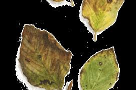 Octobre - des feuilles de hêtre sont fraîchement tombées / © Jacques Rime