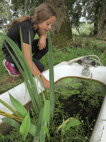 Offrez un spa aux grenouilles