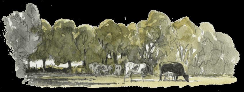 Foison de vie dans les bouses de vaches