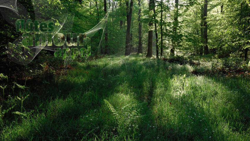 La forêt qui chante
