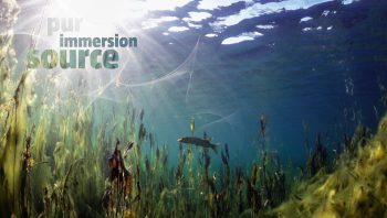 Paysage sonore sous l'eau.