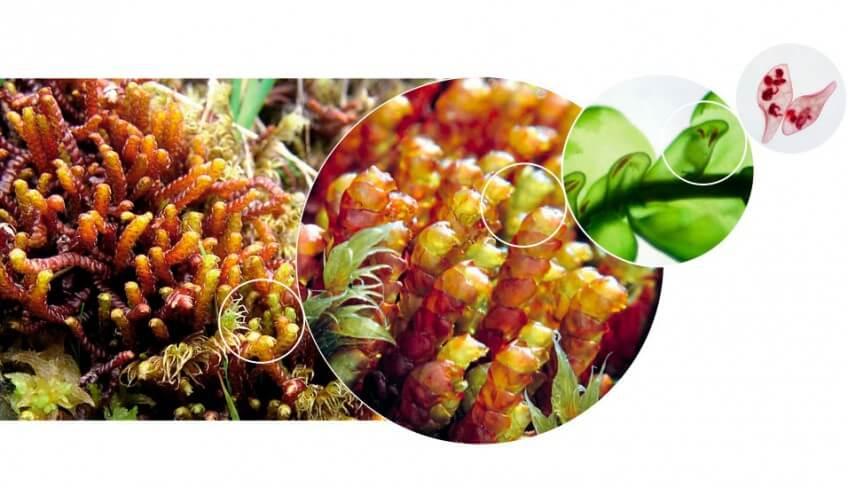 Champignons et mousses carnivores