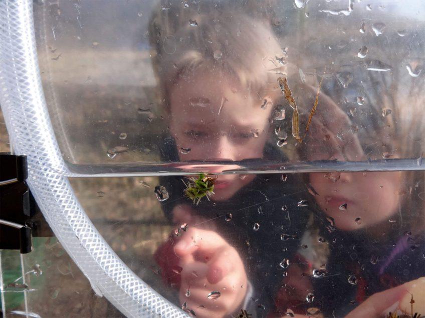 Vivez le printemps sous la mare avec l'aquarium de poche