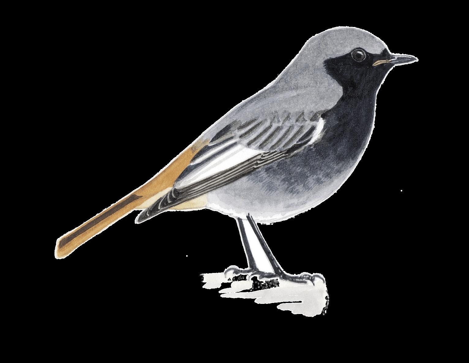 Comment construire des nichoirs pour différents oiseaux du jardin