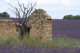 Ruine de bâtisse en galets, habitat du moineau soulcie. / © Jean-Philippe Paul
