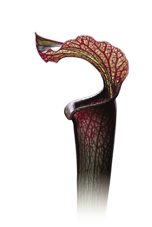 La mort par la plante carnivore