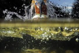 Scène de chasse du martin-pêcheur / © José Luis Rodriguez