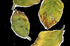 Septembre - le vert des feuilles de hêtre laisse place à des nuances infinies de jaune et de brun.  / © Jacques Rime