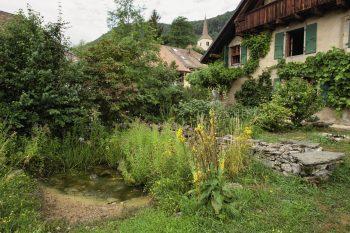 Planter une haie champêtre dans son jardin : nos conseils