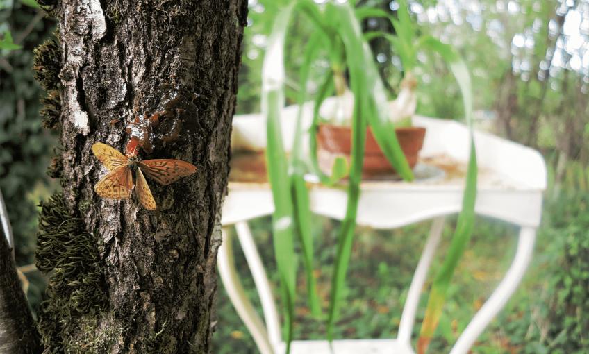 Attirez les papillons dans votre jardin pour les observer facilement