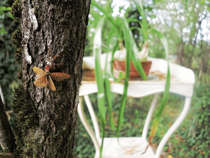Tartinez pour les papillons