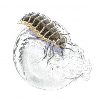 Voici la horde des prédateurs d'escargots
