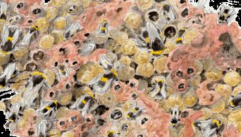 Des bourdons s'activent dans leur palais de cire et de nectar.