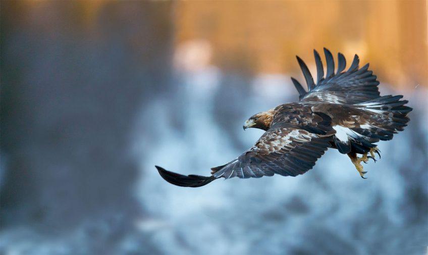 Les tribulations d'un banni parmi les aigles