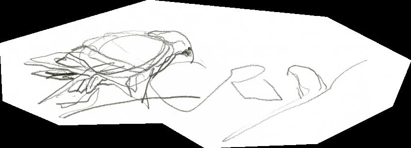 En direct du nid d'aigle