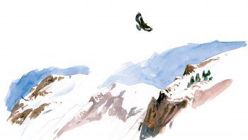 Aigle royal planant au-dessus de son royaume