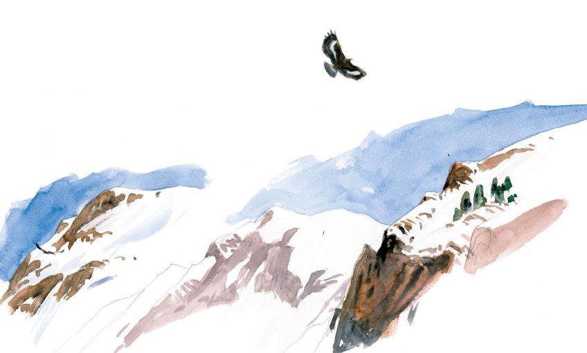 Au sommet, l'aigle est roi