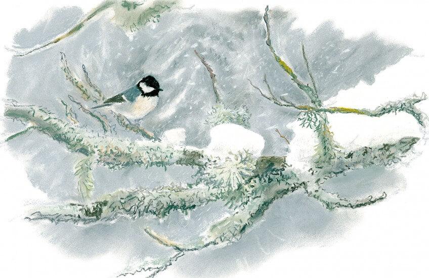 Mésange norie en hiver