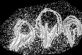 Croquis d'une loutre suivie par ses deux loutrons / © Jean Chevallier