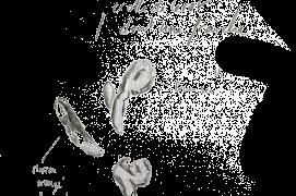 « Crottes de lérot dont une fraîche. » / © Olivier Loir