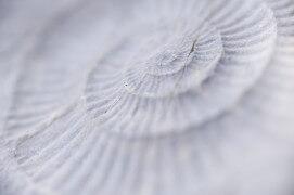 Fossile d'ammonite trouvé dans la roche / © Christophe Sidamon-Pesson