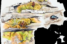 Gendarmes (punaises) et chrysomèle de la linaire (coléoptère). / © Olivier Loir