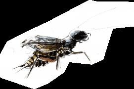 « Il agite la tête de droite à gauche et se balance (allure de fourmi!!) » / © Benoît Perrotin