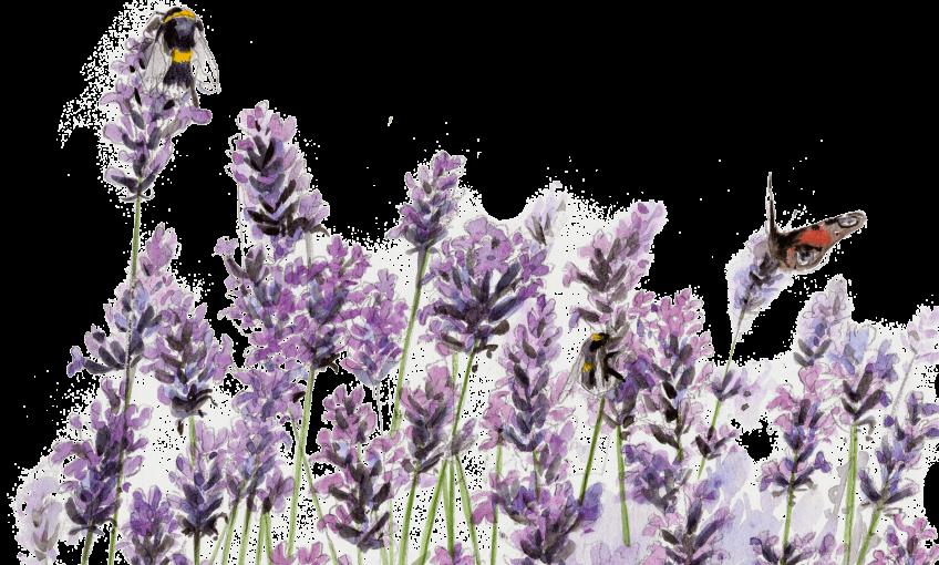 Fleurir pour les abeilles