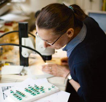 Laure Desutter-Grandcolas consacre son existence à l'étude des grillons