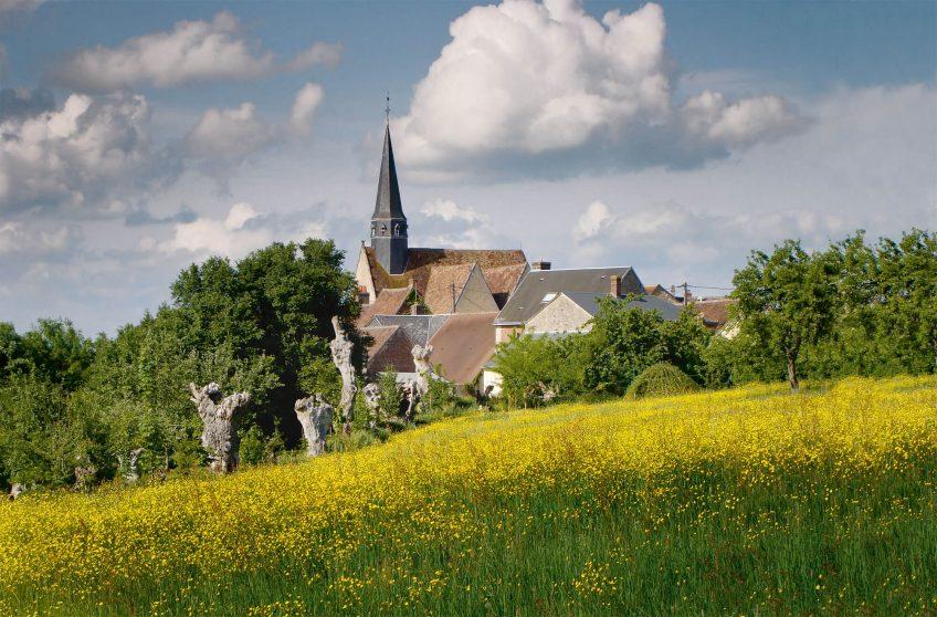Parmi les trognes du bocage de Sargé-sur-Braye