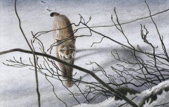 « Le lynx se rapproche plus…