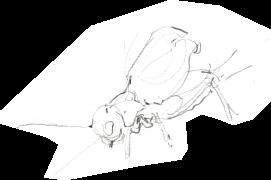 « Le mâle tourne, s'agite autour du nid. Il effectue des va-et-vient. » / © Benoît Perrotin