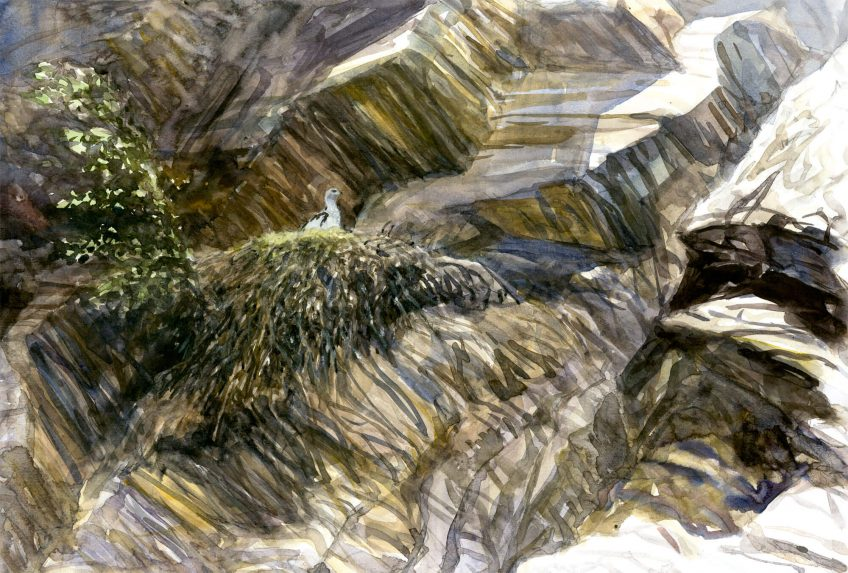 Un petit aigle nommé Caïn