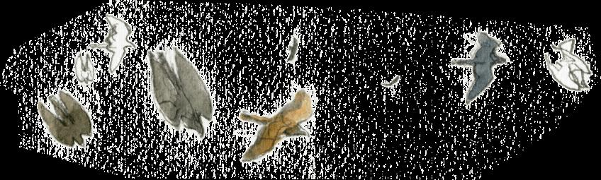 L'aigle aux frontières de son royaume