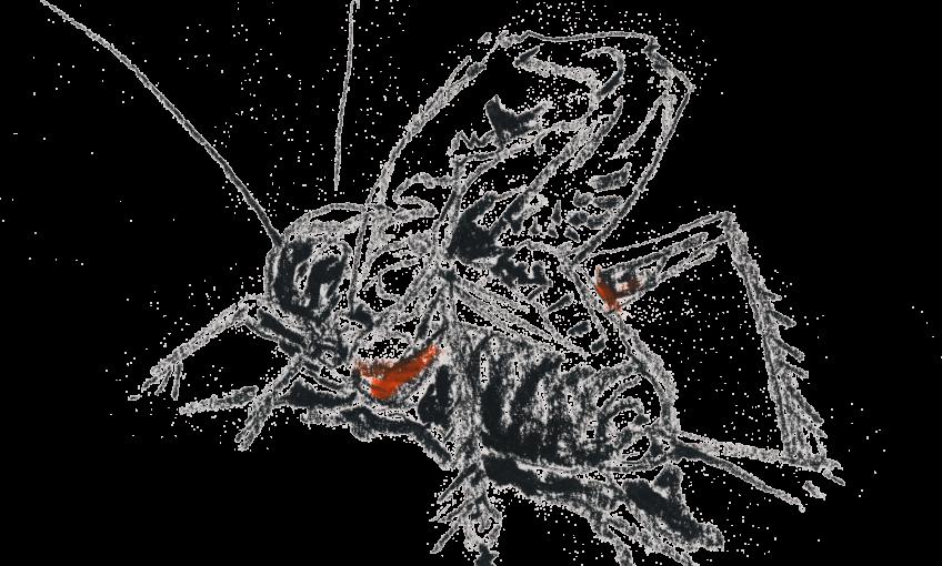 Le grillon est un gaucher sur stradivarius