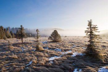Pâturage boisé du Jura dans la brume fraîche du matin