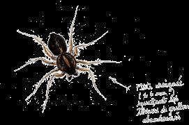 Quelques voisins du grillon: les araignées / © Benoît Perrotin