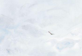 Un aigle se détache dans le ciel