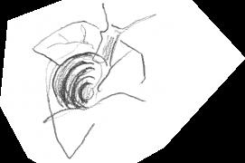 Escargot sur une feuille de lierre / © Olivier Loir