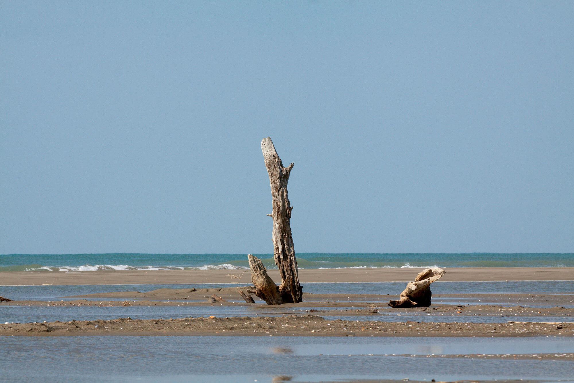Balade en Camargue dans le vent et les pieds dans l'eau