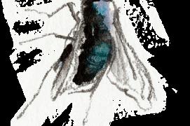 « Une mouche dans la ruche! (x2) » / © Benoît Perrotin