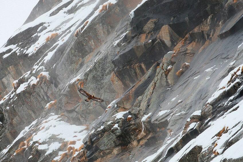 Photo d'aigle l'hiver