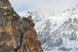 23 novembre - Tant que la couche de neige n'est pas trop importante, quelques chamois s'attardent sur les crêtes où le vent dégage un peu de nourriture. / © Anne et Erik Lapied