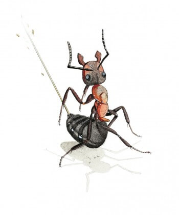 Dessin de fourmi produisant un jet d'acide