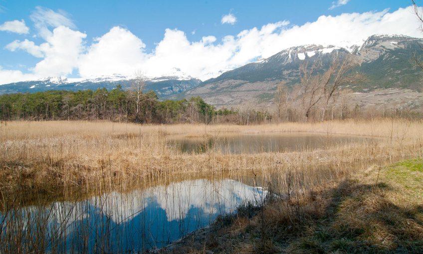 Au coeur du bois de Finges coule un Rhône encore sauvage