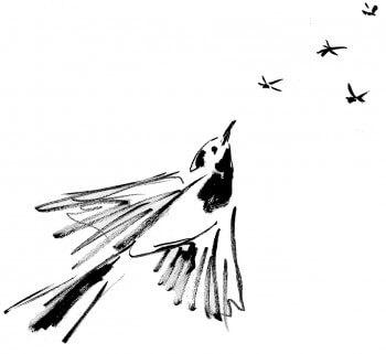 « Bergeronnette grise en chasse »