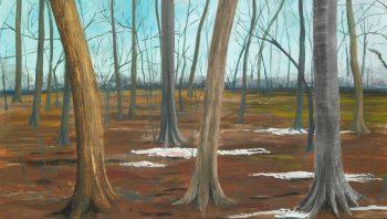 Chêne (tronc de gauche), charme (au centre) et hêtre (à droite) se côtoient dans cette forêt endormie.