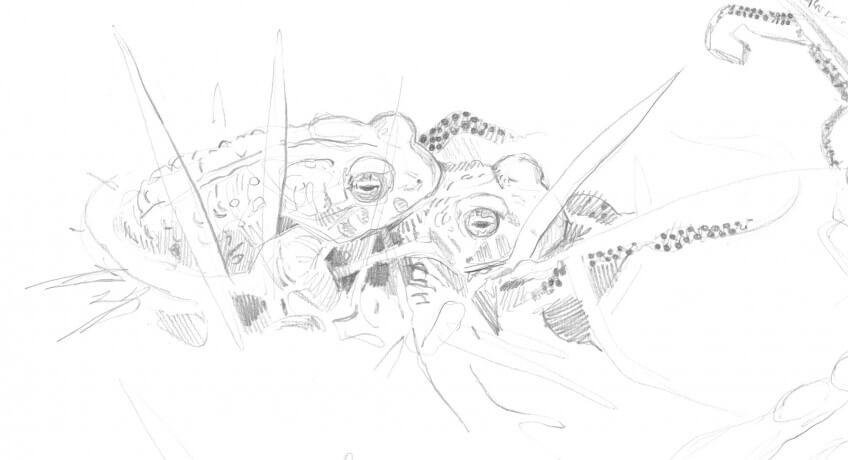 dessin d'accouplement de crapauds