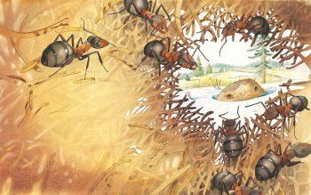 Chez les fourmis, le sexe est…